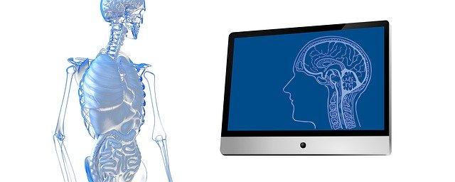 Intestin , notre 2ème cerveau